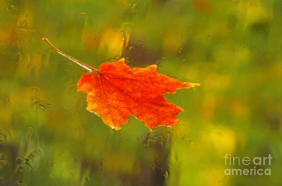 Still Life Photograph - Leaf In Rain by Eva Kato