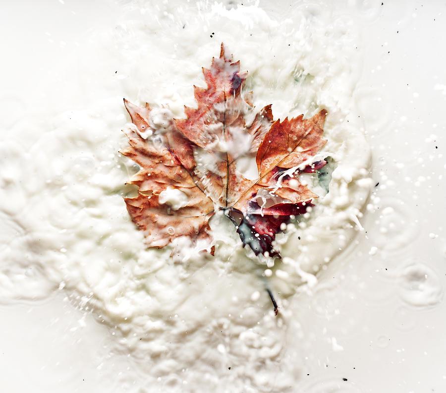 Autumn Photograph - Leaf Leap by Ivan Vukelic