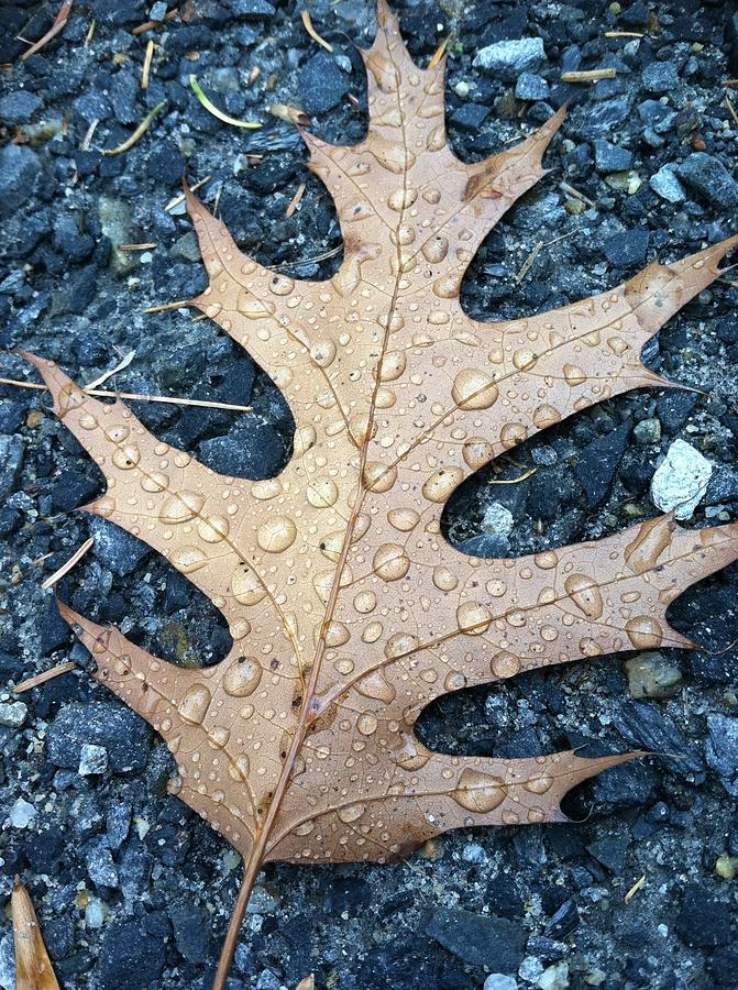 Leaf Photograph by Michelle Simard