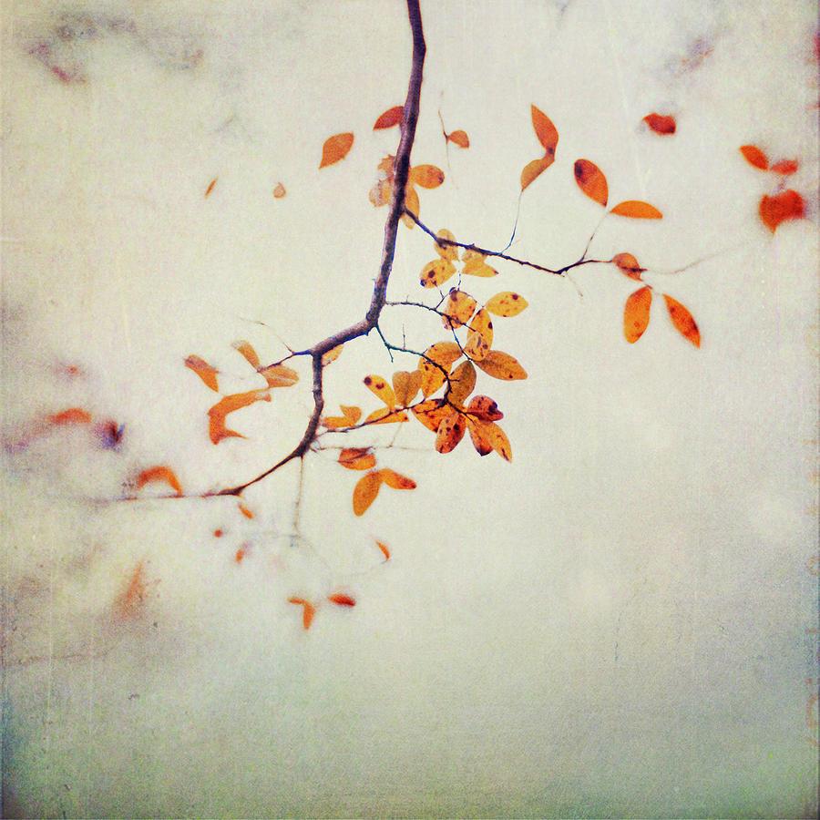 Leaf Motif Photograph by Dawn D. Hanna