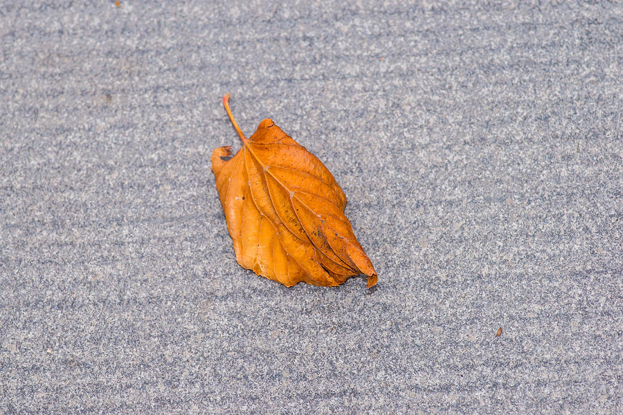 Abstract Photograph - Leaf On Granite 1 by Alexander Senin