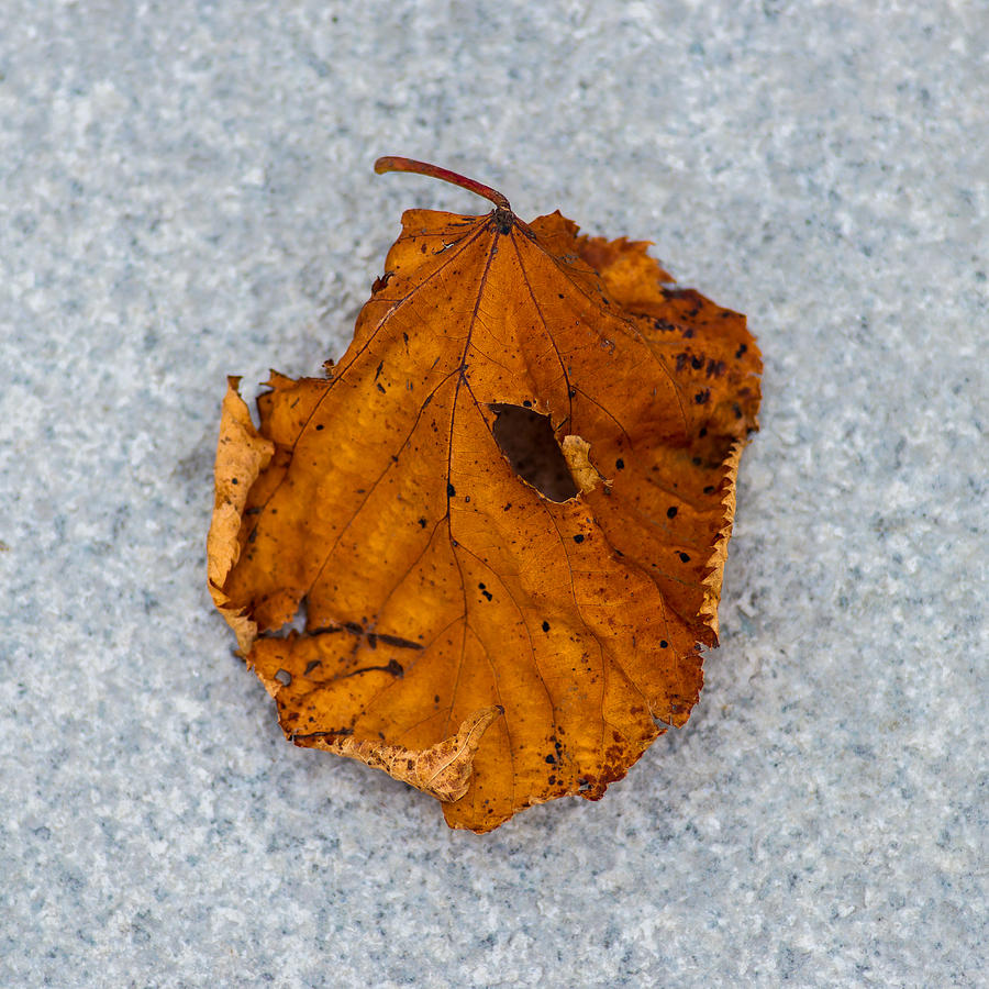 Abstract Photograph - Leaf On Granite 11 - Square by Alexander Senin