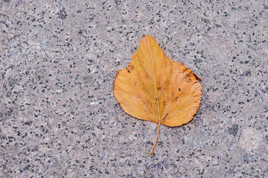 Abstract Photograph - Leaf On Granite 2 by Alexander Senin