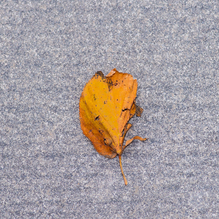 Abstract Photograph - Leaf On Granite 3 - Square by Alexander Senin