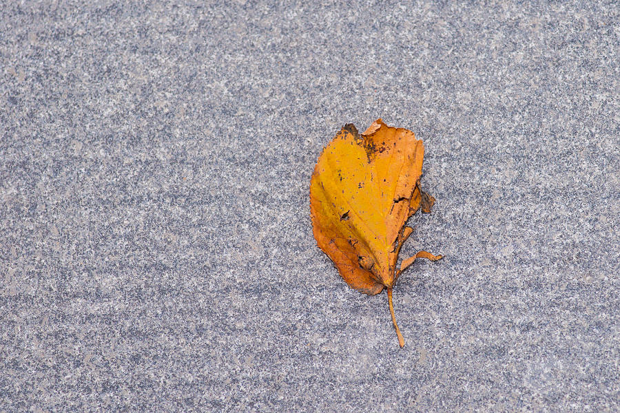 Abstract Photograph - Leaf On Granite 3 by Alexander Senin