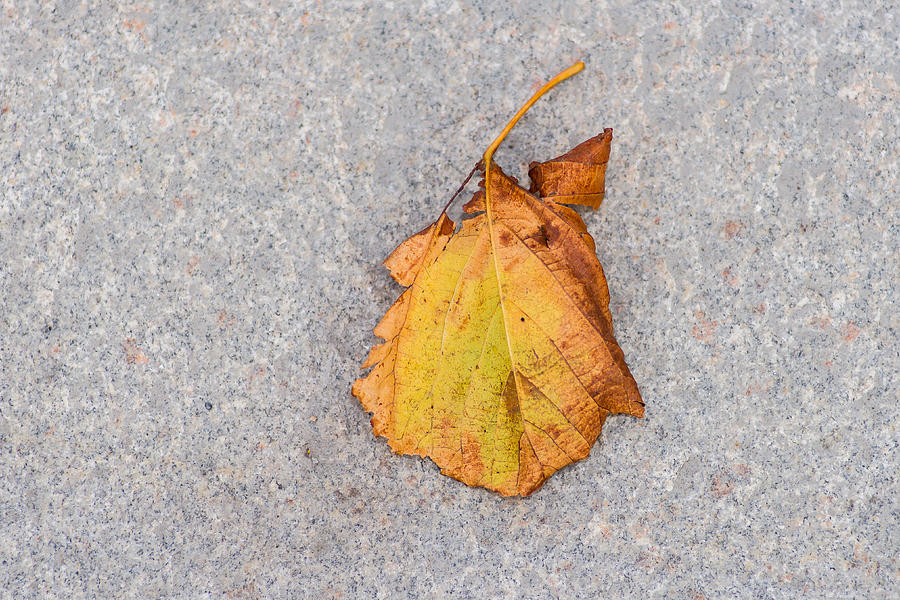 Abstract Photograph - Leaf On Granite 4 by Alexander Senin