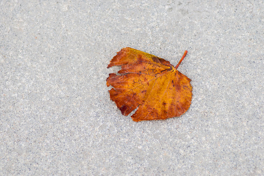 Abstract Photograph - Leaf On Granite 8 by Alexander Senin