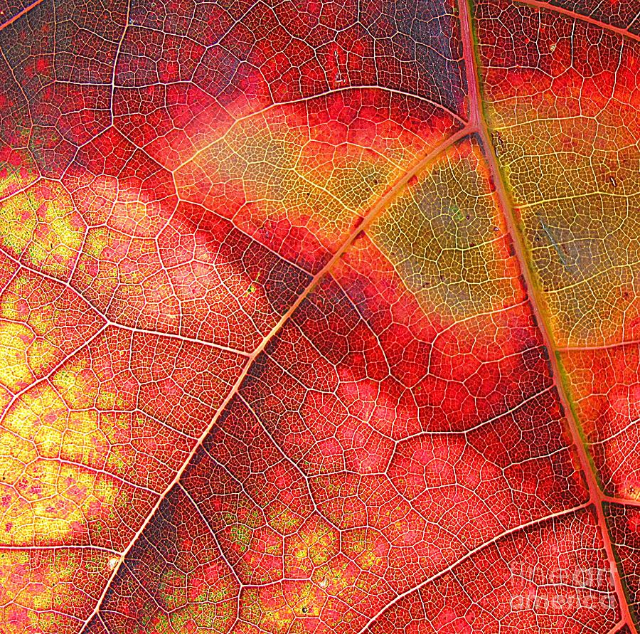 Beautiful Photograph - Leaf Pattern_1 by Halyna  Yarova