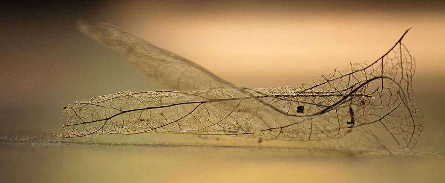 Leaf Skeleton by Sarah Broadmeadow-Thomas