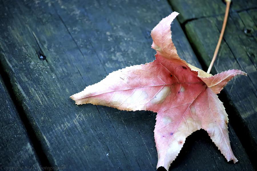 Leaf Photograph - Leaf by Stacie  Goodloe