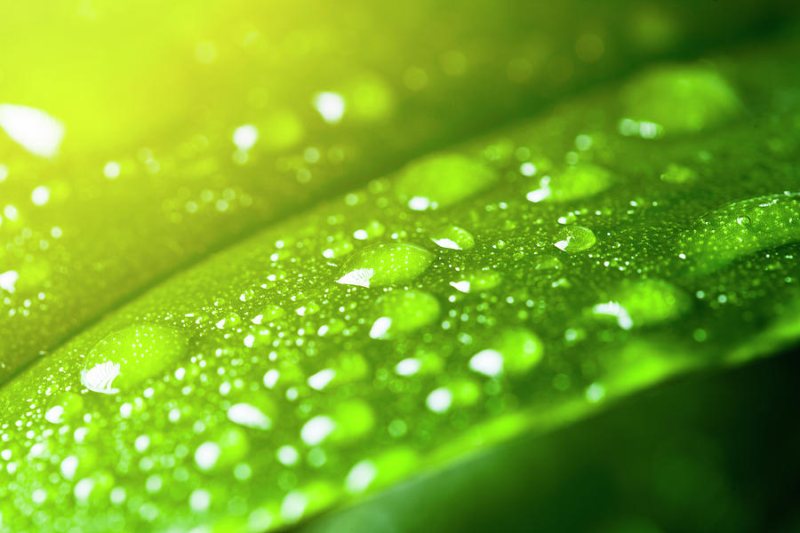 Leaf With Rain Droplets Photograph by Neoblues
