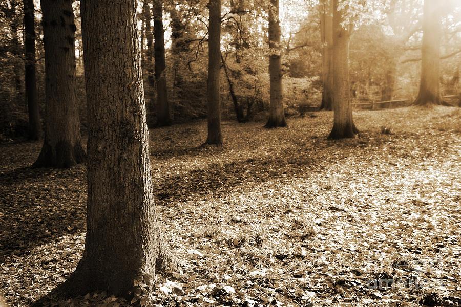 Autumn Photograph - Leafy Autumn Woodland In Sepia by Natalie Kinnear