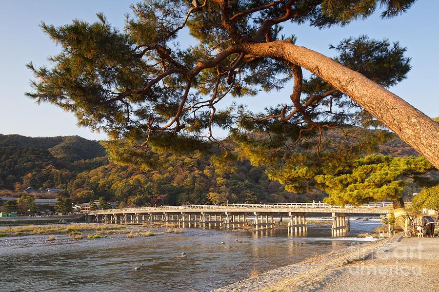 Arashiyama Photograph - Leaning Pine Tree Arashiyama Kyoto Japan by Colin and Linda McKie