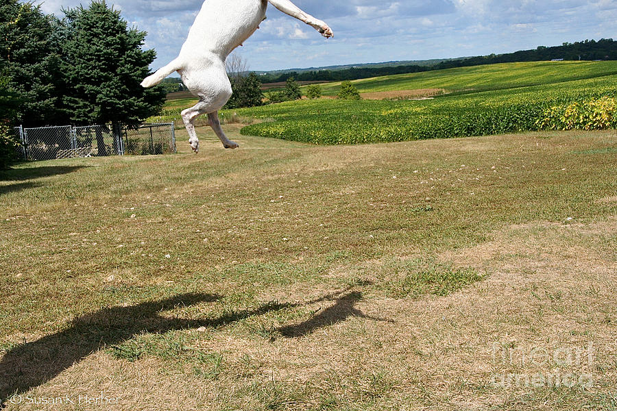 Dog Photograph - Leap Higher by Susan Herber