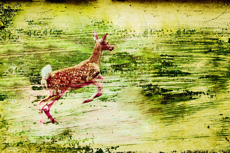 Deer Photograph - Leap Into Spring by Jon Van Gilder