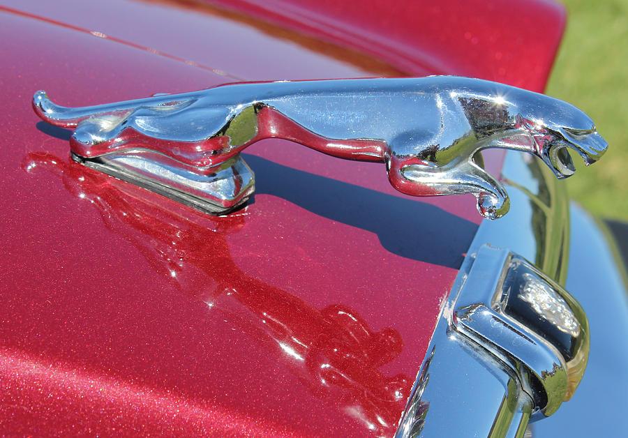Jaguar Photograph - Leaper Hood Ornament On Red Jaguar by Mark Steven Burhart