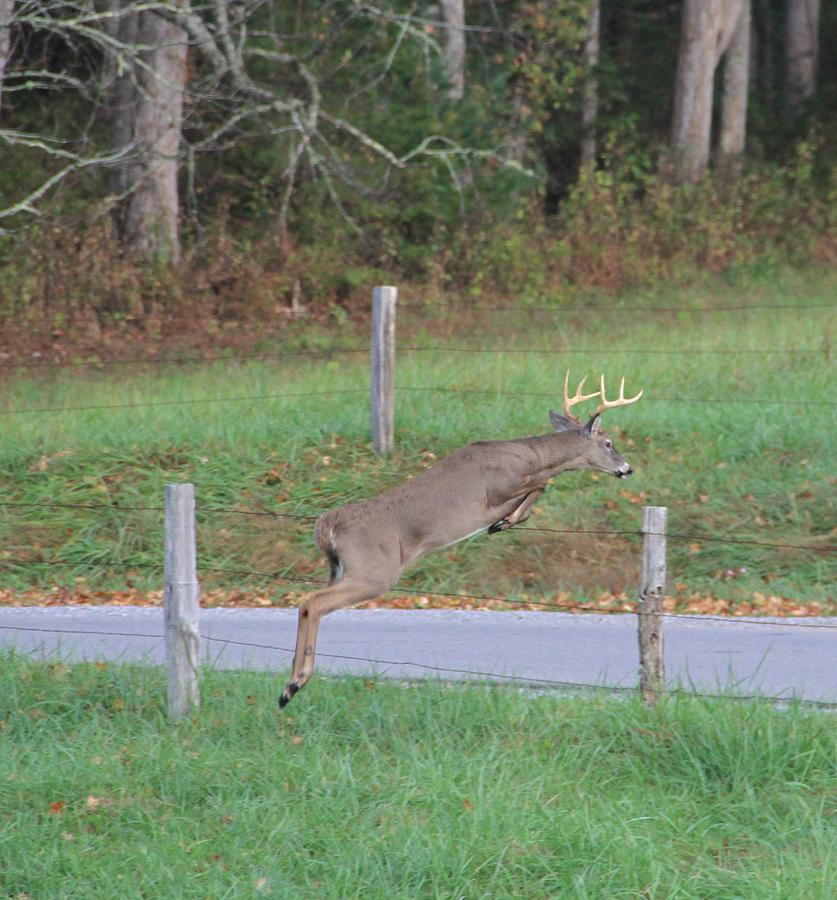 Leaping Buck In Smoky Mountains Photograph - Leaping Buck In Smoky Mountains by Dan Sproul