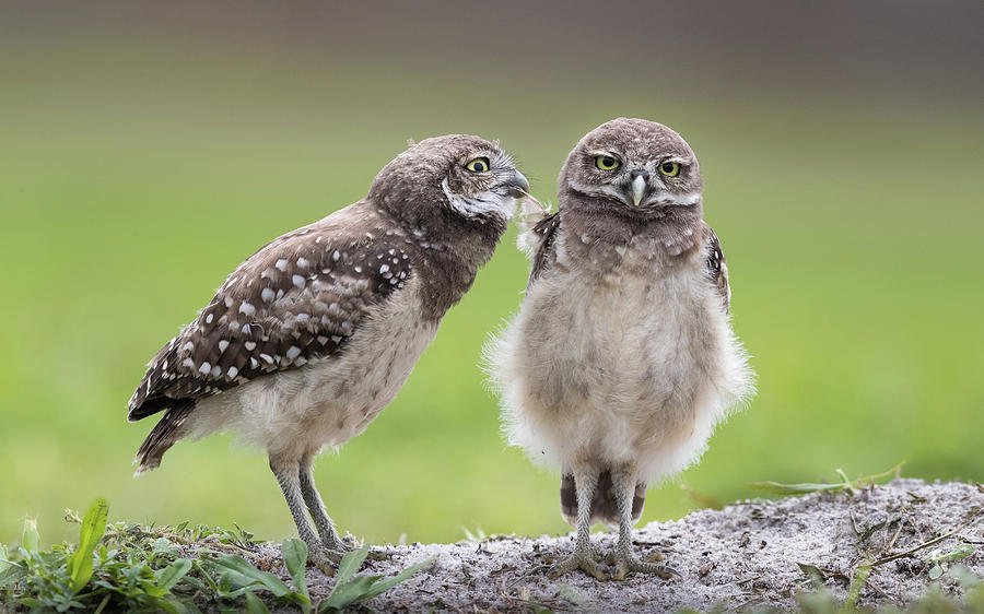 Owl Photograph - Leave Me Alone! by Greg Barsh