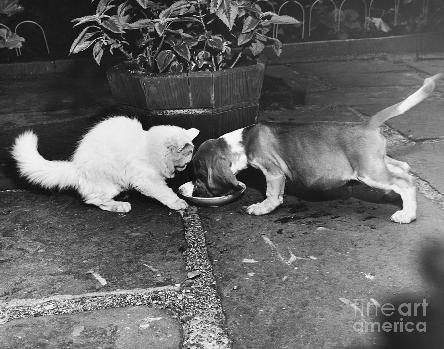 Pet Photograph - Leave Some by M E Browning
