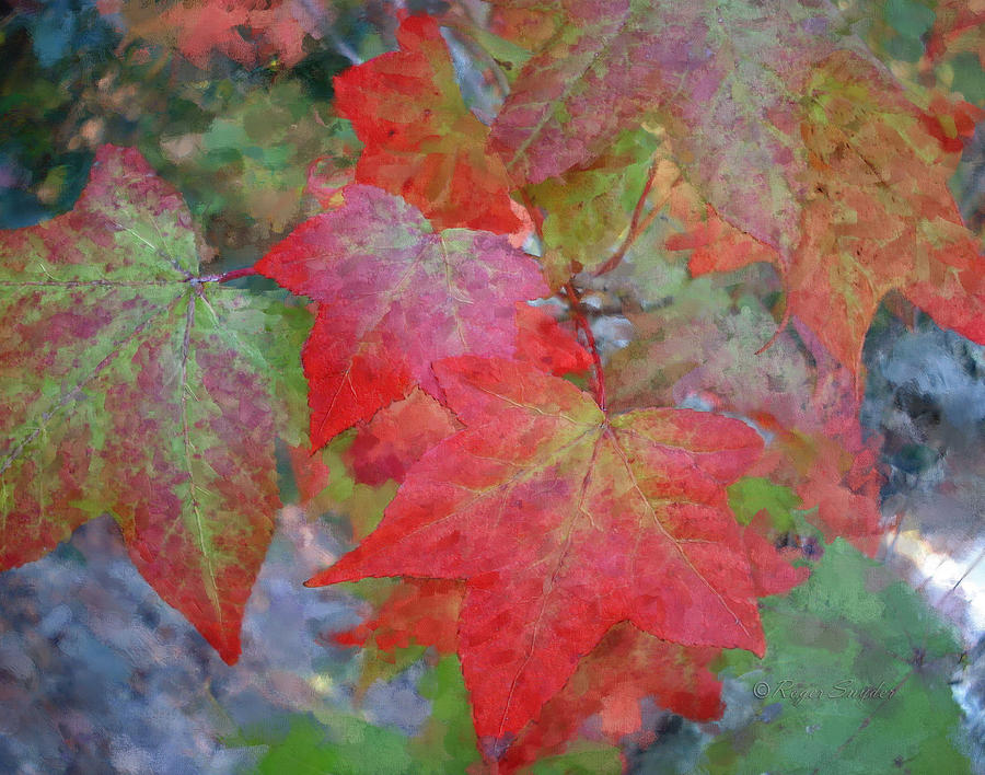 Autumn Painting - Leaves 2 by Roger Snyder