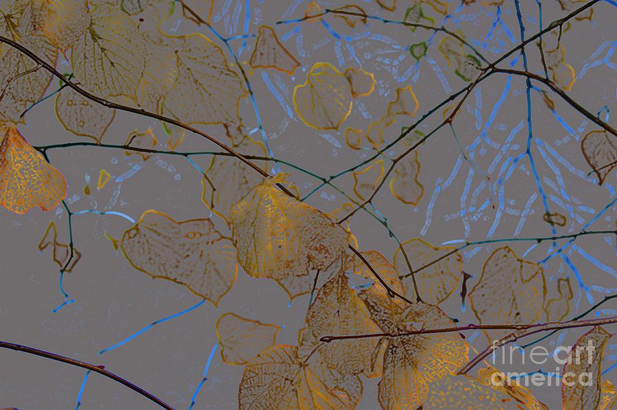 Leaves Digital Art - Leaves by Carol Lynch