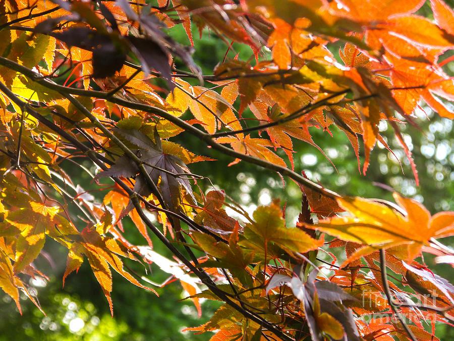 Landscape Photograph - Leaves by Ernest Puglisi