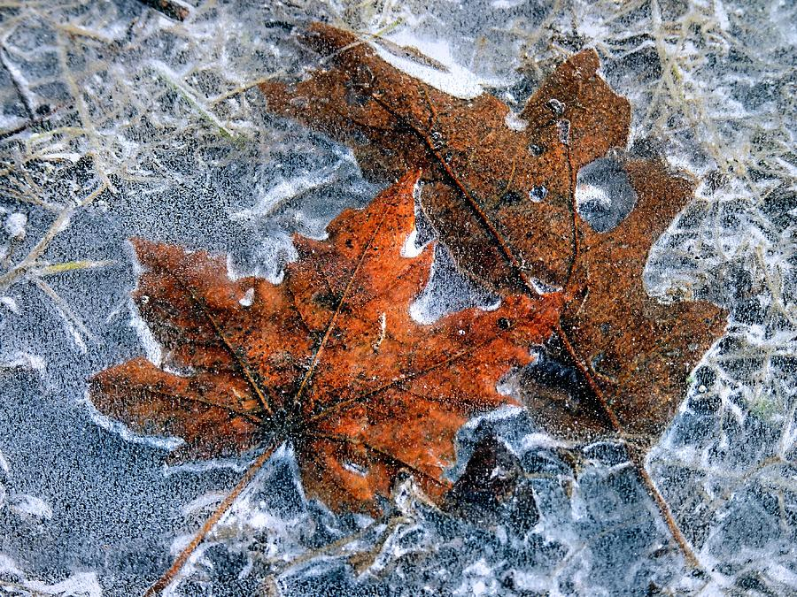 Image result for frozen puddle