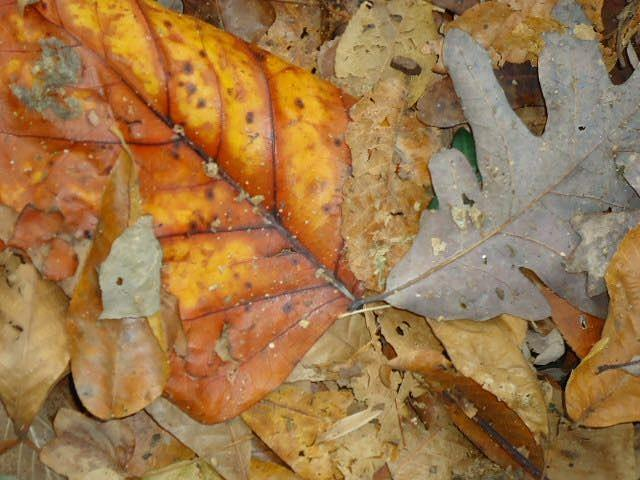 Leaves Photograph - Leaves by Glenn Calloway