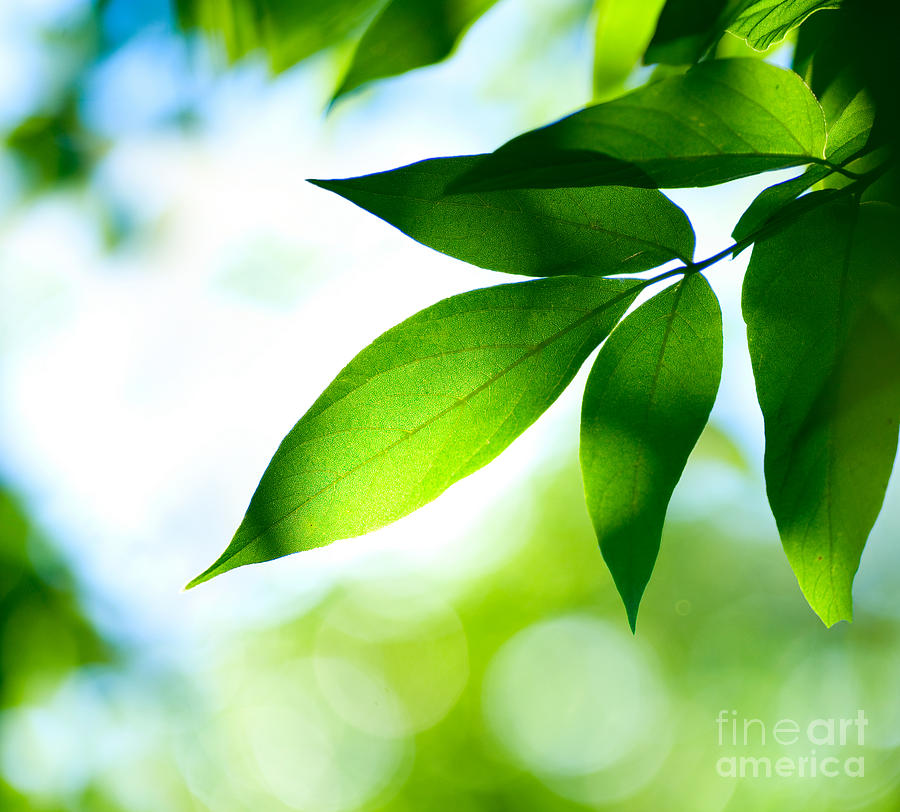 Green Photograph - Leaves Green by Boon Mee