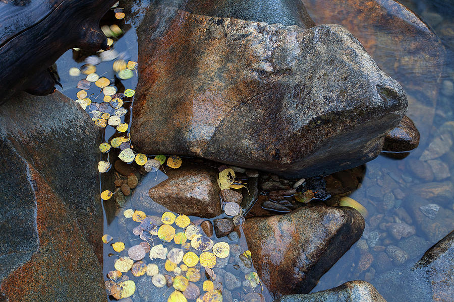 Autumn Colors Photographs Photograph - Leaves In A Stream by Jim Garrison