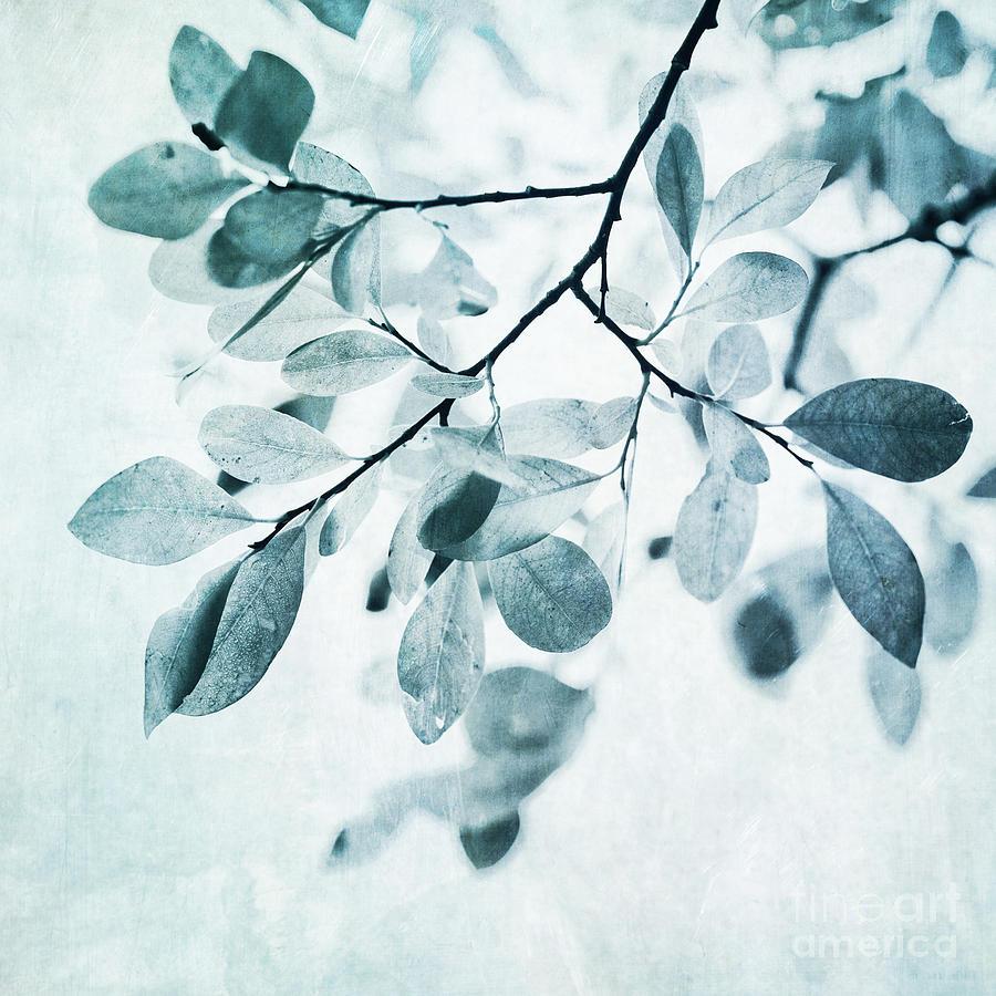 Foliage Photograph - Leaves In Dusty Blue by Priska Wettstein