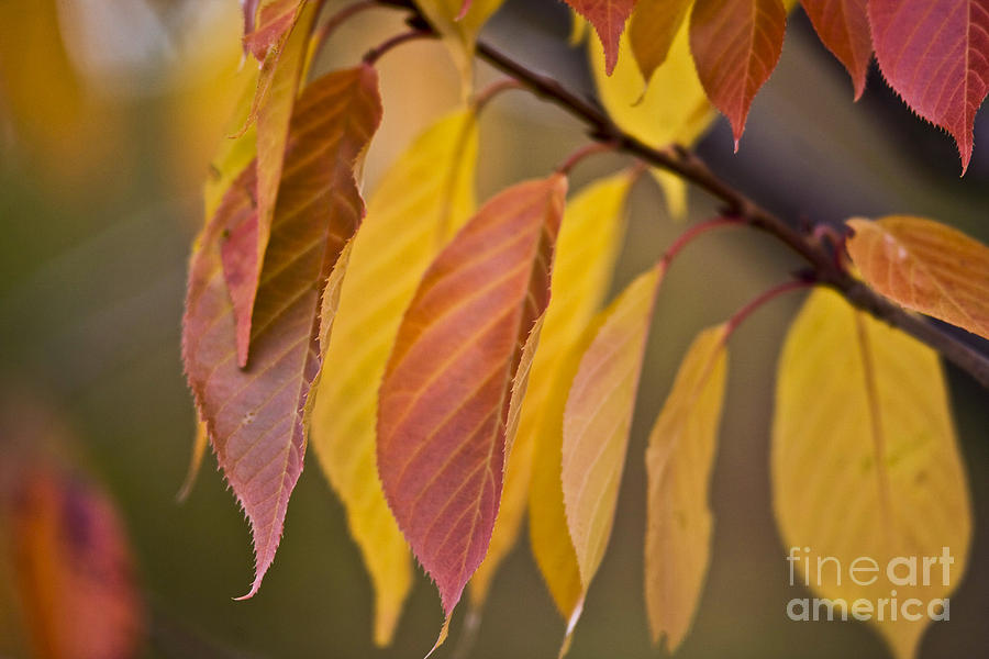 Heiko Photograph - Leaves In Fall by Heiko Koehrer-Wagner