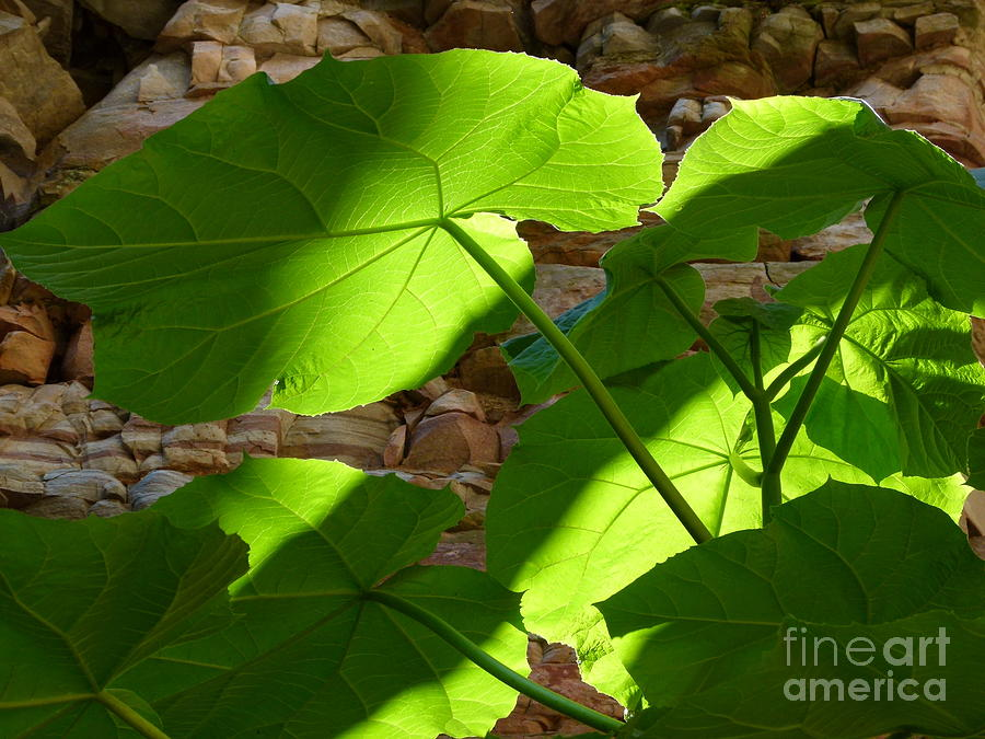 leaves in shadow by Jane Ford