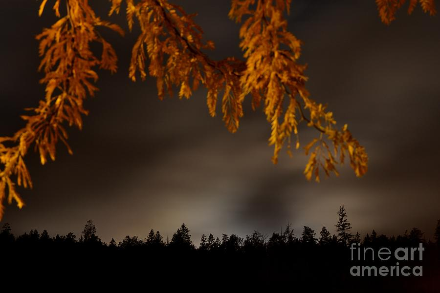 Night Photography Photograph - Leaves In The Night II by Phil Dionne
