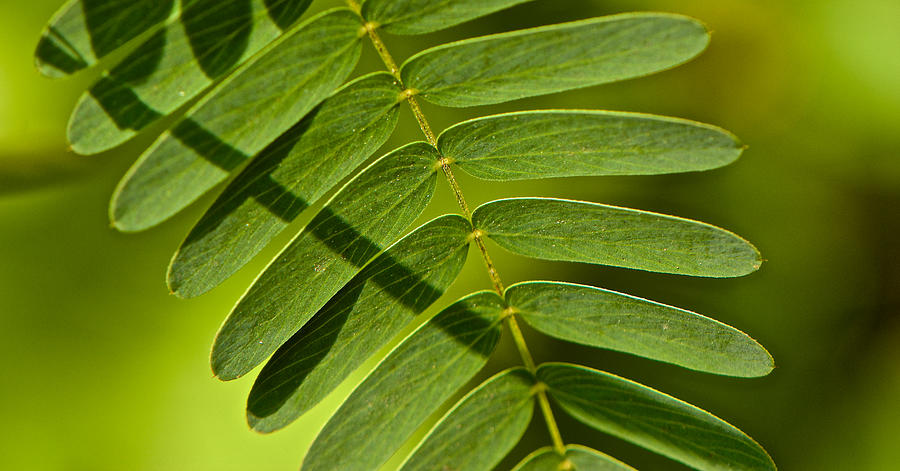 Bees Photograph - Leaves by Kathi Isserman