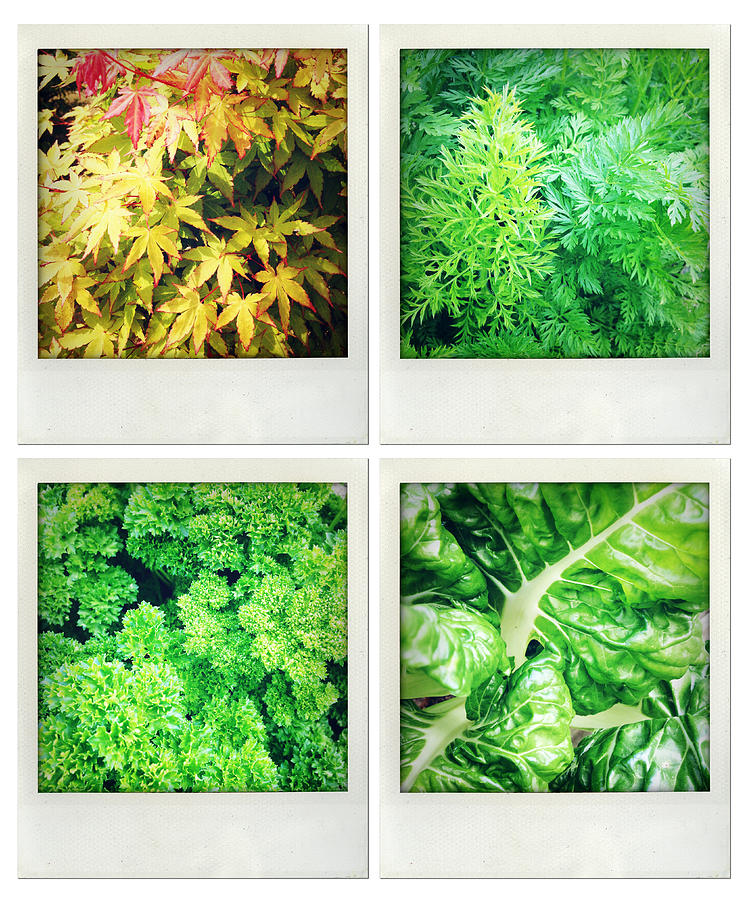 Green Photograph - Leaves by Les Cunliffe
