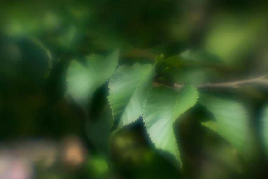 Leaf Photograph - Leaves Of Serenity by Kimberly Ayars