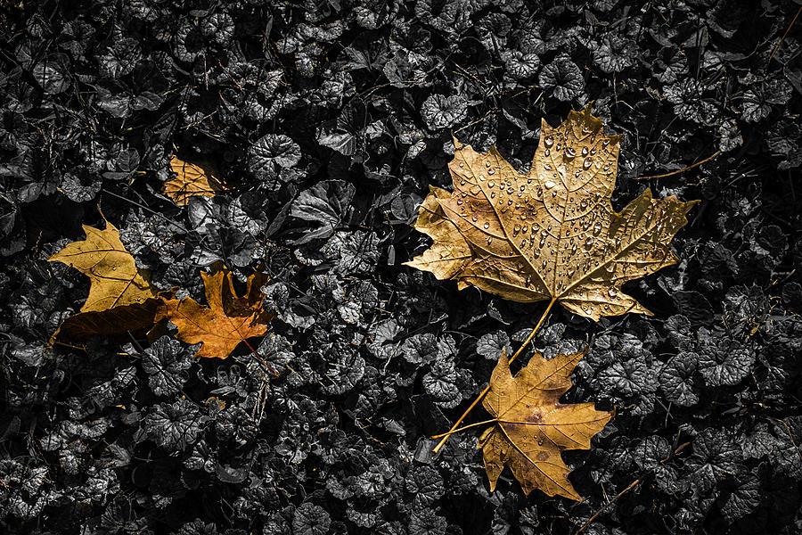 Autumn Photograph - Leaves on Forest Floor by Tom Mc Nemar