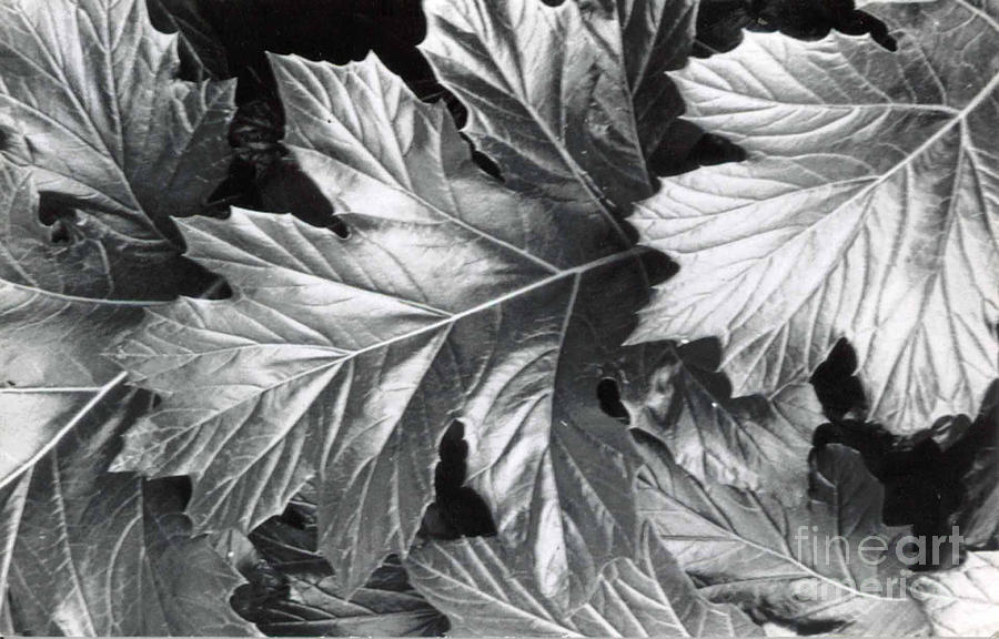 Leaves by Patricia  Tierney
