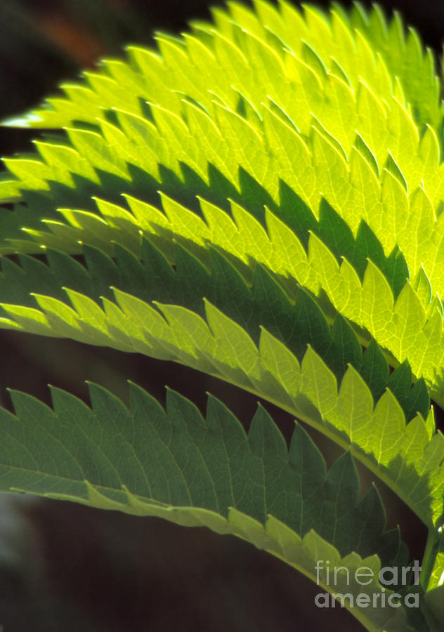 Still Life Photograph - Leaves Patterns by Eva Kato