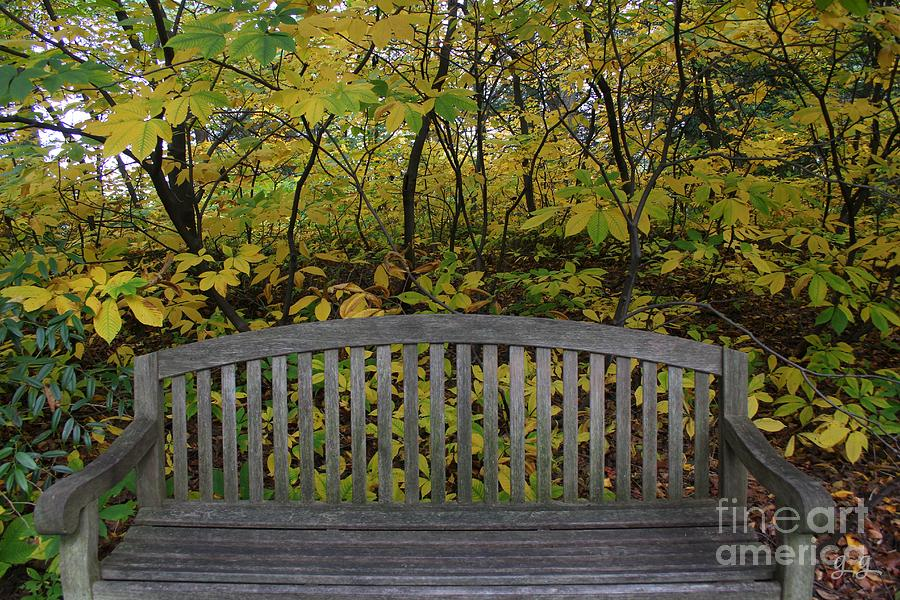 Bench Photograph - Leaving In The Fall by Geri Glavis