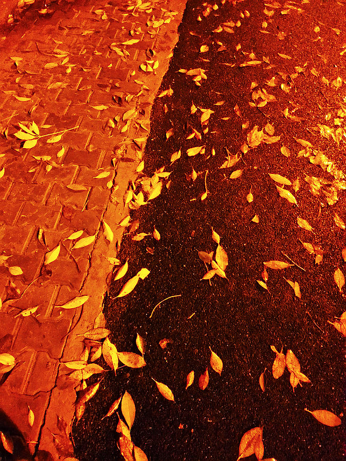 Leaf Photograph - Leaving Past by Atinderpal Singh