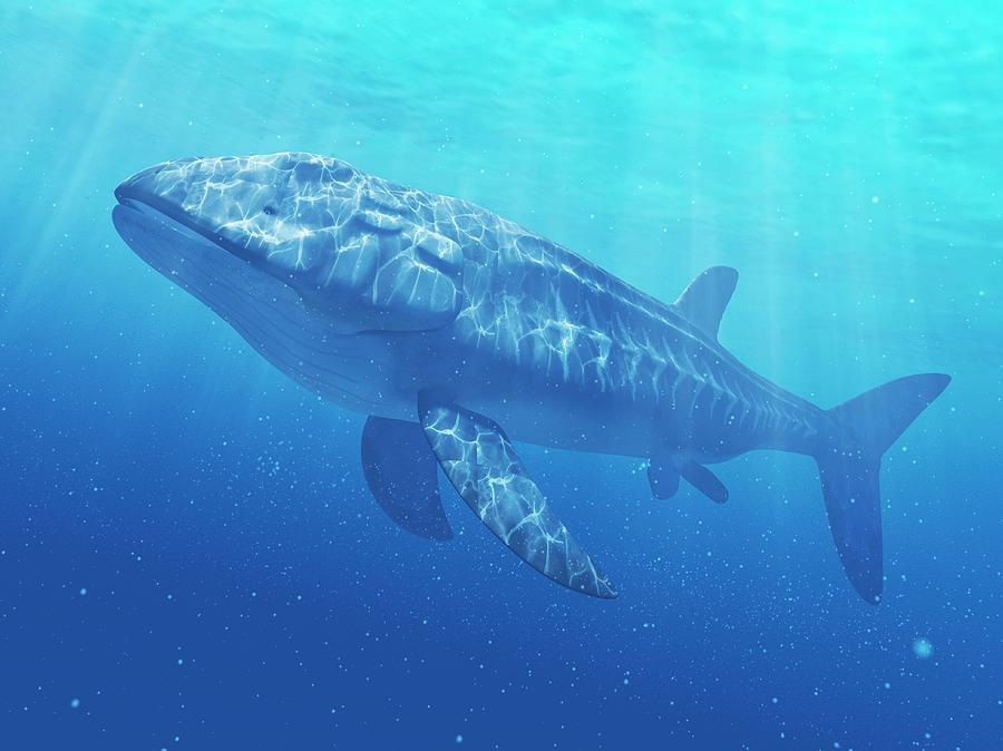 Leedsichthys Prehistoric Fish, Artwork Digital Art by Sciepro