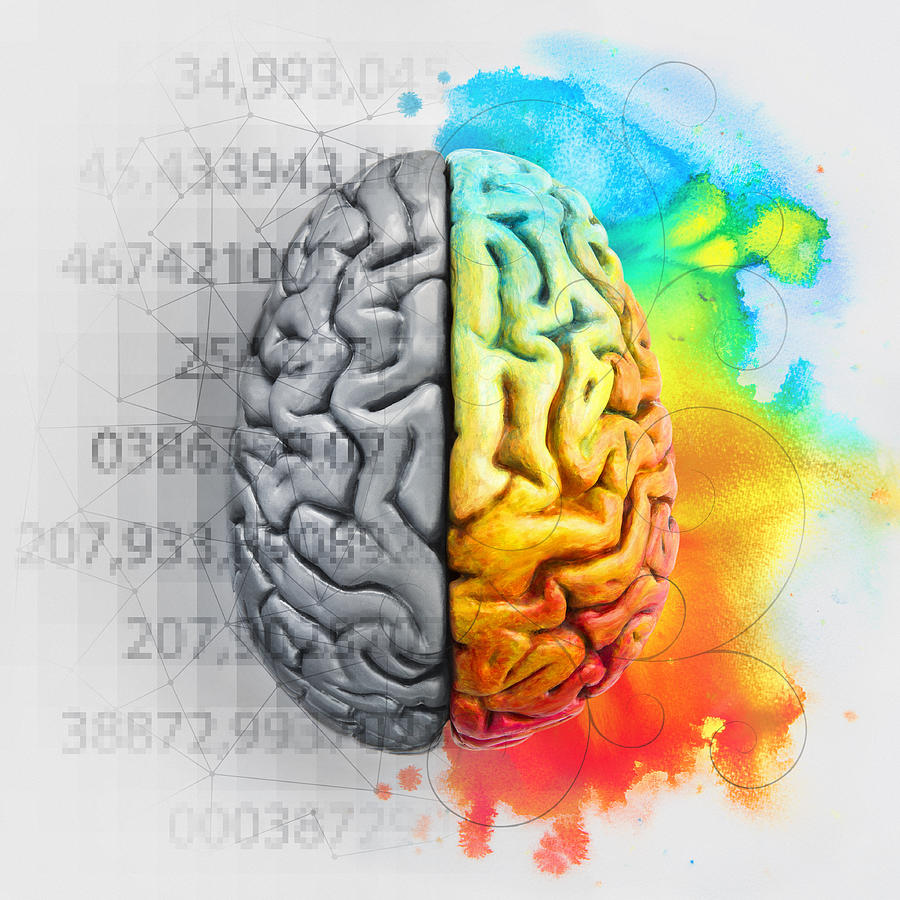 Left and right brain showing different functions Photograph by Dimitri Otis
