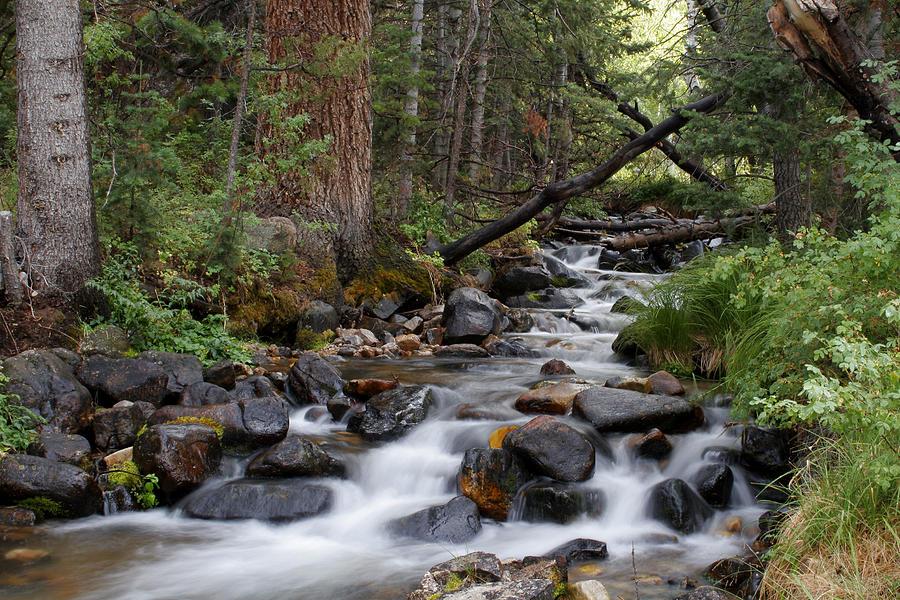 Lehman Creek in Great Basin National Park by Rick Pisio