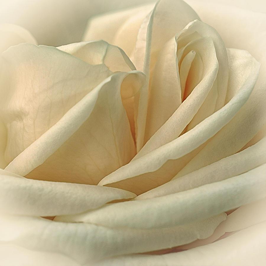 Floral Photograph - Lemon Meringue by Darlene Kwiatkowski
