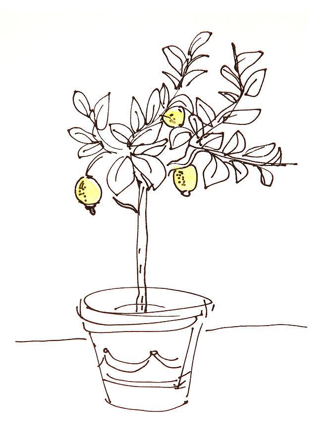 картинка лимонное дерево распечатать туры всем