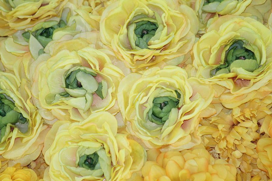 Lemons Photograph - Lemons And Limes by Patrisha Gill