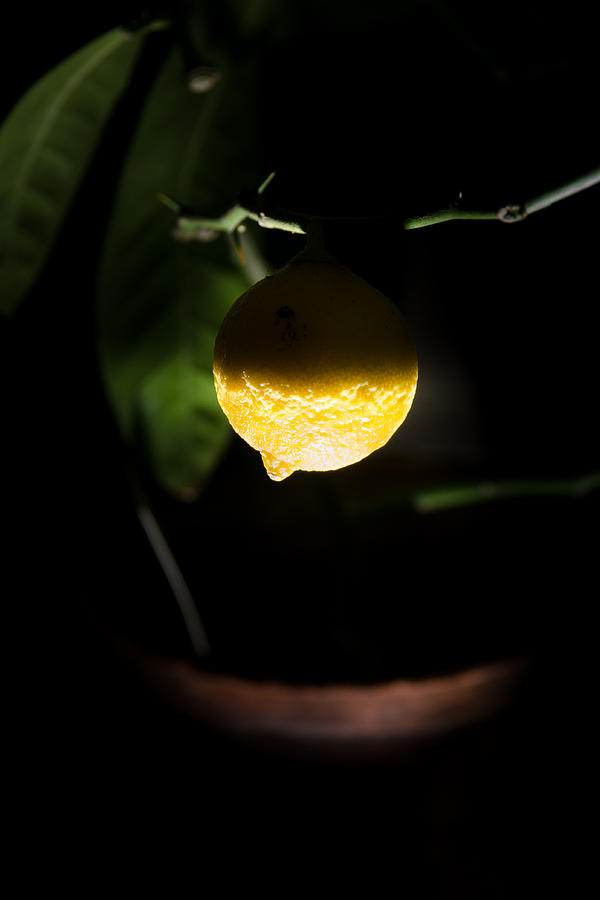 Beauty Photograph - Lemons Planet by Michael Goyberg