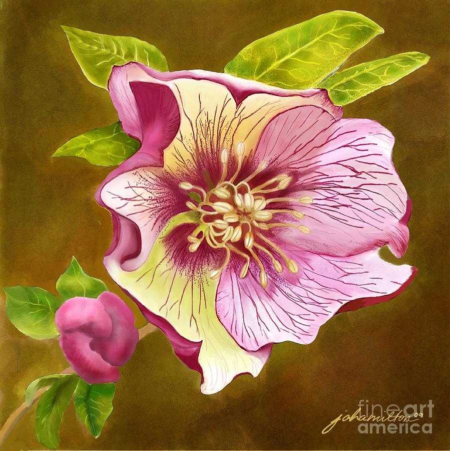 Lenten Rose Painting - Lenten Rose by Joan A Hamilton